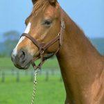 僕の愛馬だったシルキービートは長男の生まれた年に中山競馬場でデビューしました。その長男坊も4月から京都で一人暮らし生活デビューです。